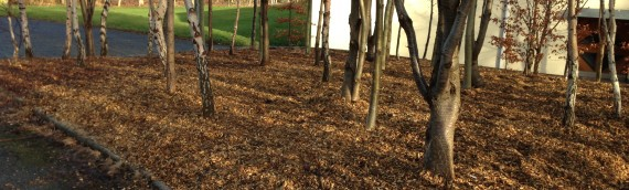 TY students create Woodland Garden